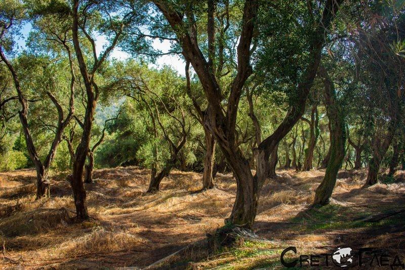 Маслинова гора, остров Корфу