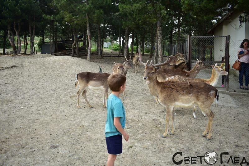 Зоокът в Хаджидимово