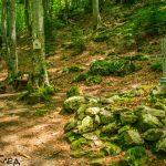 Местност Мечи гроб