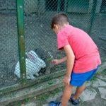 Парк Рила, Дупница