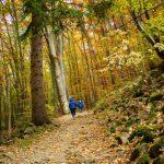 От Драгалевския манастир до Алековия водопад