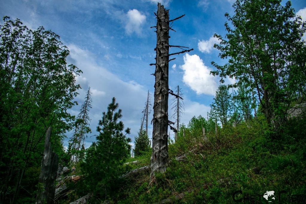 Попарената гора, х. Вежен