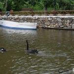 Лебедово езеро, Смолари